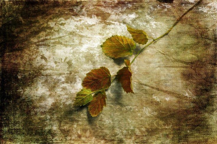 ARTFINDER: Hazel Leaves by Randi Grace Nilsberg - Photo with textures.