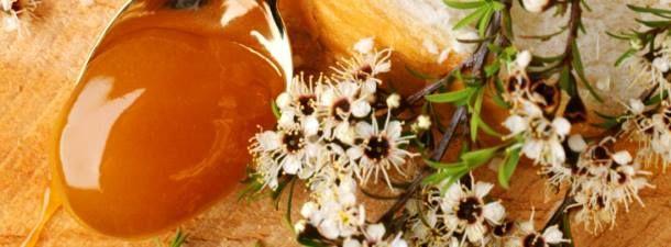 Der Ruhm des neuseeländischen Naturprodukts ist vor allem Prof. Thomas Henle von der Universität Dresden zu verdanken. Er hat mit seinem Team Manuka-Honig untersucht und festgestellt, dass er einen hohen Anteil des Zuckerabbauprodukts Methylglyoxal (MGO) enthält. In herkömmlichen Honigsorten sind 5 Milligramm in einem Kilo Honig enthalten. Bei Manuka liegt die Konzentration bei 300 bis 700 Milligramm pro Kilo. Prof. Henle hat weiterhin herausgefunden, dass die Menge an Methylglyoxal nicht…