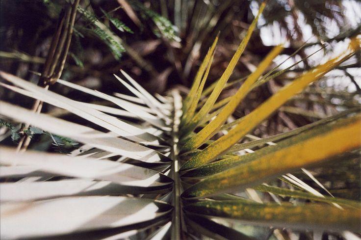 https://flic.kr/p/FLoxtU | Sidadi. | Ilha do Santiago. (35mm) | by Samuel Musungayi.  Captured with a Nikon FM and a roll of Kodak Gold 200. | CanoScan 8600F.  Cidade Velha, Ribeira Grande, Ilha do Santiago.  Cabo Verde.