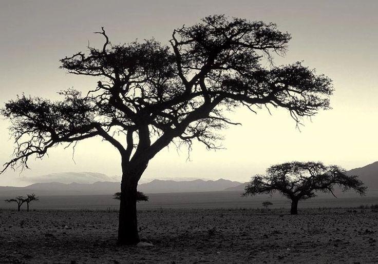 Брезент отпечатки красивая картина маслом африка пейзаж с вал от искусство фотографии защите окружающей среды