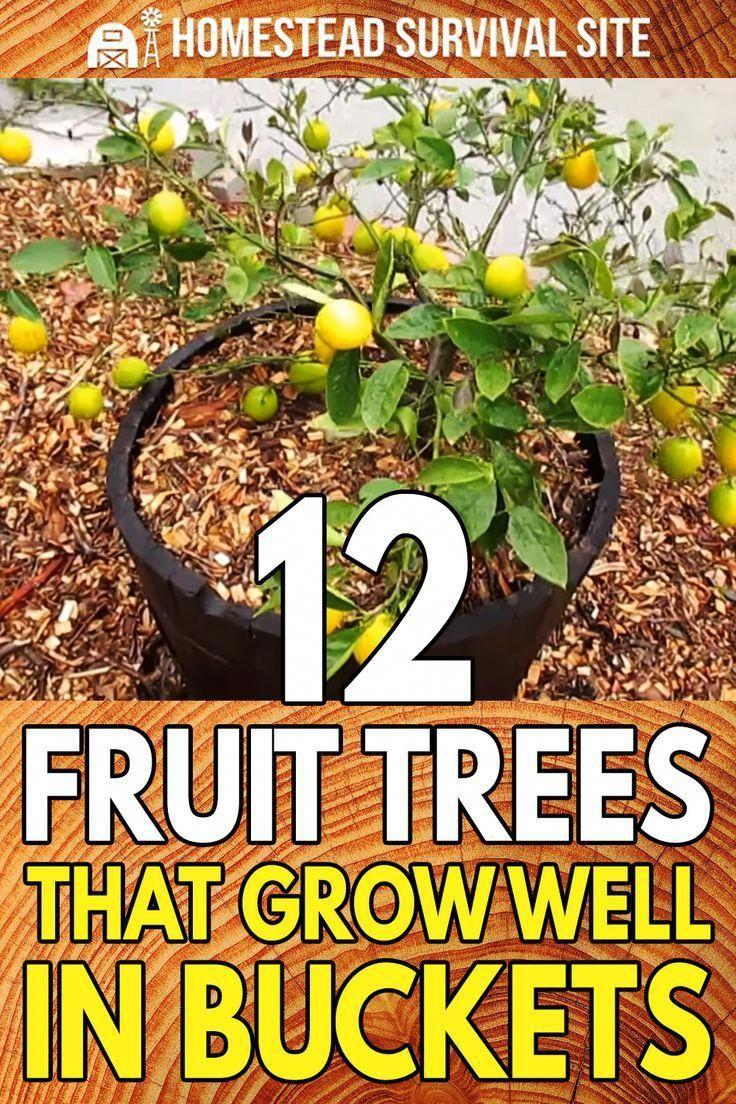59084bdc62e9dce9f6a170c3b3080167 - Growing Citrus The Essential Gardener's Guide