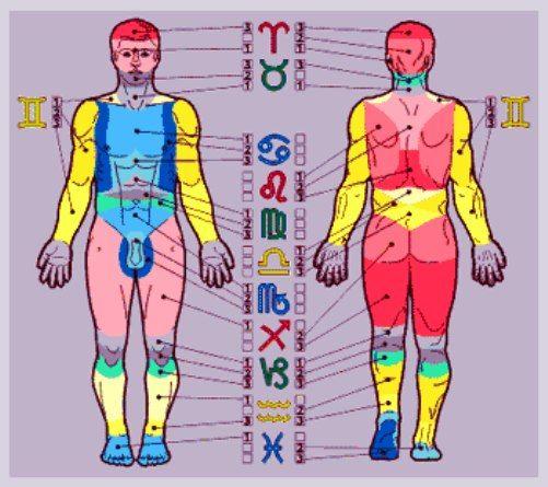 Зодиак и Анатомия человека.