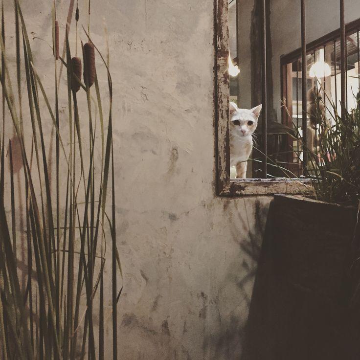 Spy cat @hatyai Thailand