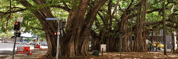 What A Tree Lopper Can Do For Your Yard In Brisbane.