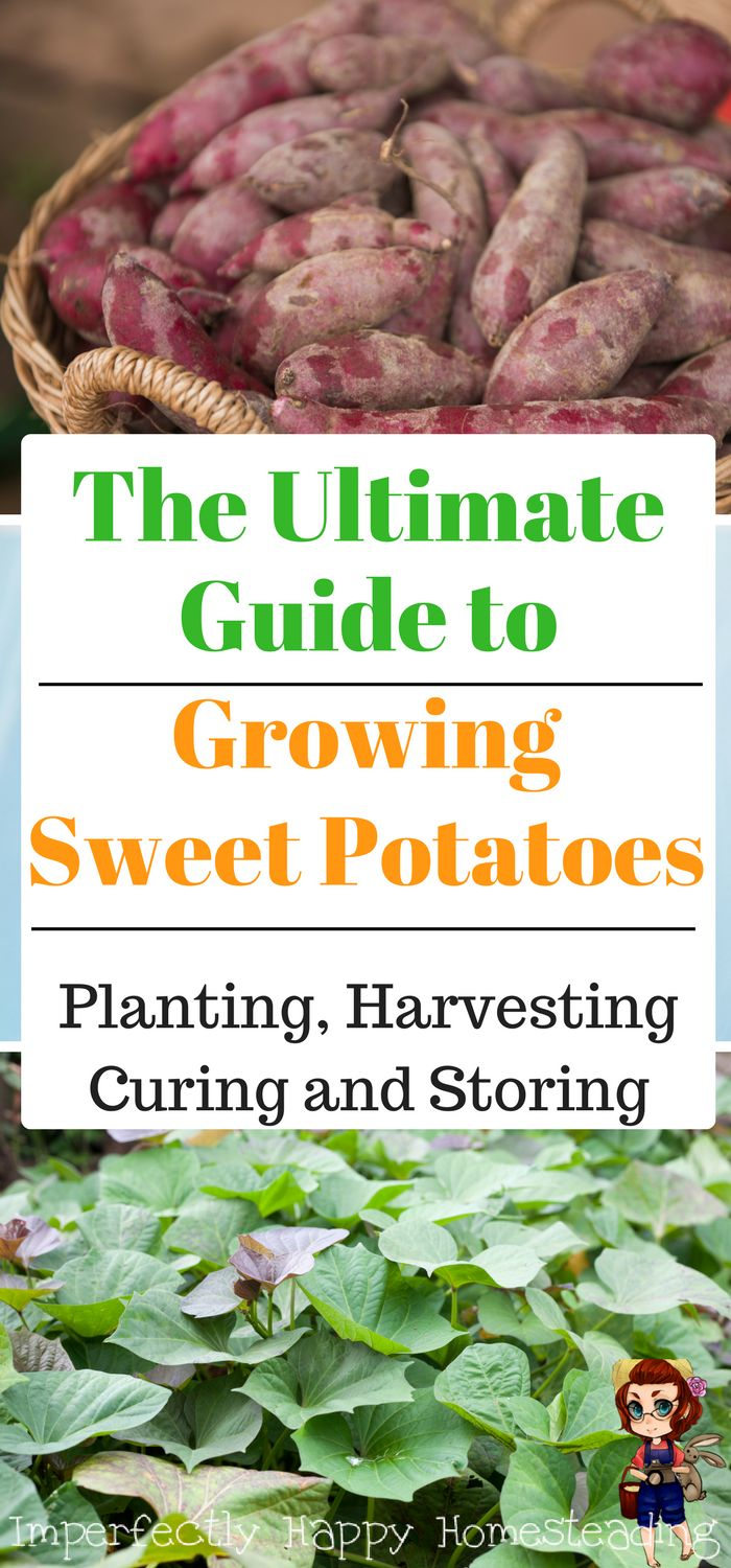 Kitchen Garden Preserves 17 Best Images About Backyard Farming And Homesteading On