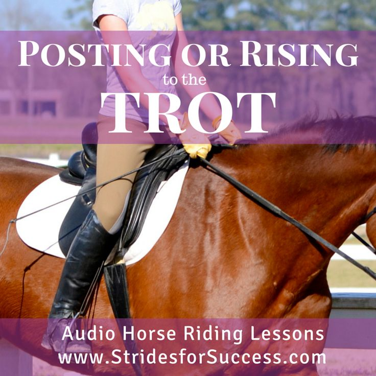Rising or Posting while Trotting.. Are you doing it correctly? Find out with this weeks audio horse riding lessons in Daily Strides from Strides for Success