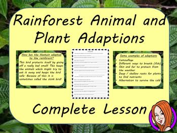 Complete Lesson on Understanding the Adaptions of Plants and Animals in the RainforestThis download includes a complete lesson on the adaptions animals and plants have made to survive in the rainforest. The lesson focuses on learning why animals and plants have certain attributes which help them survive in the rainforest.
