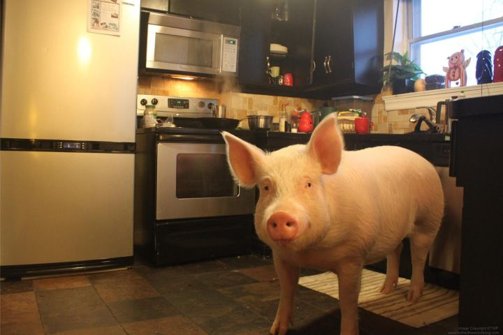 14 best images about esther the wonder piggy on pinterest