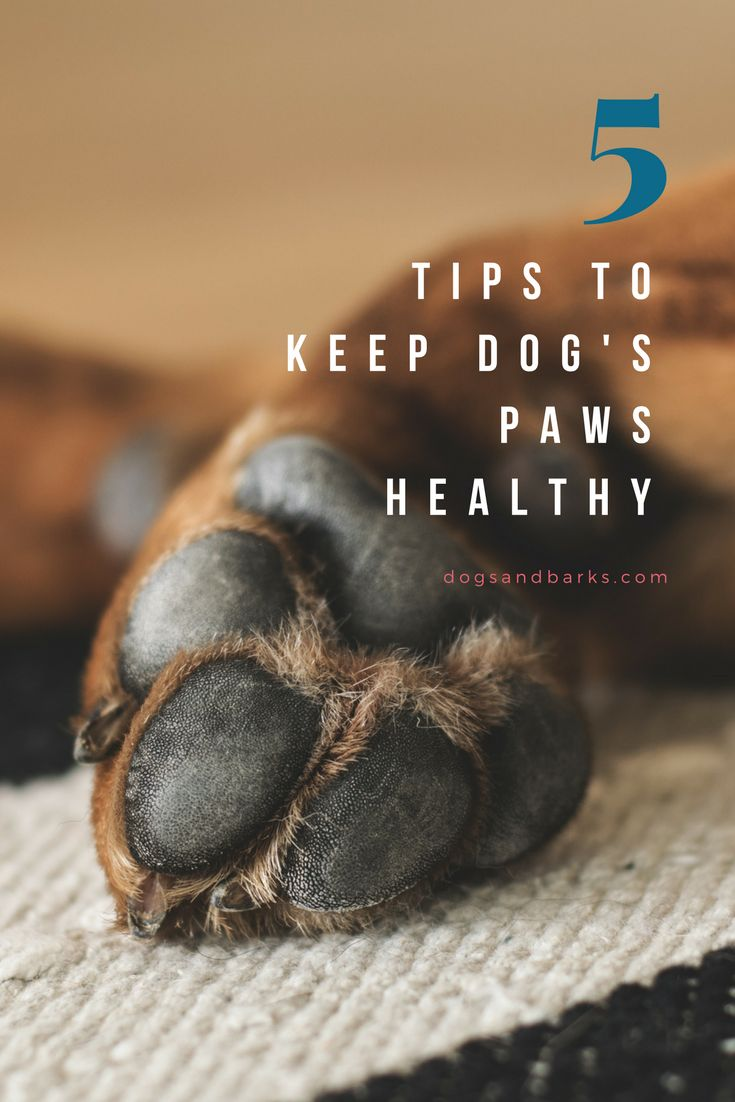 How wholesome are your canine's paws? You won't even know. The reality of the m…