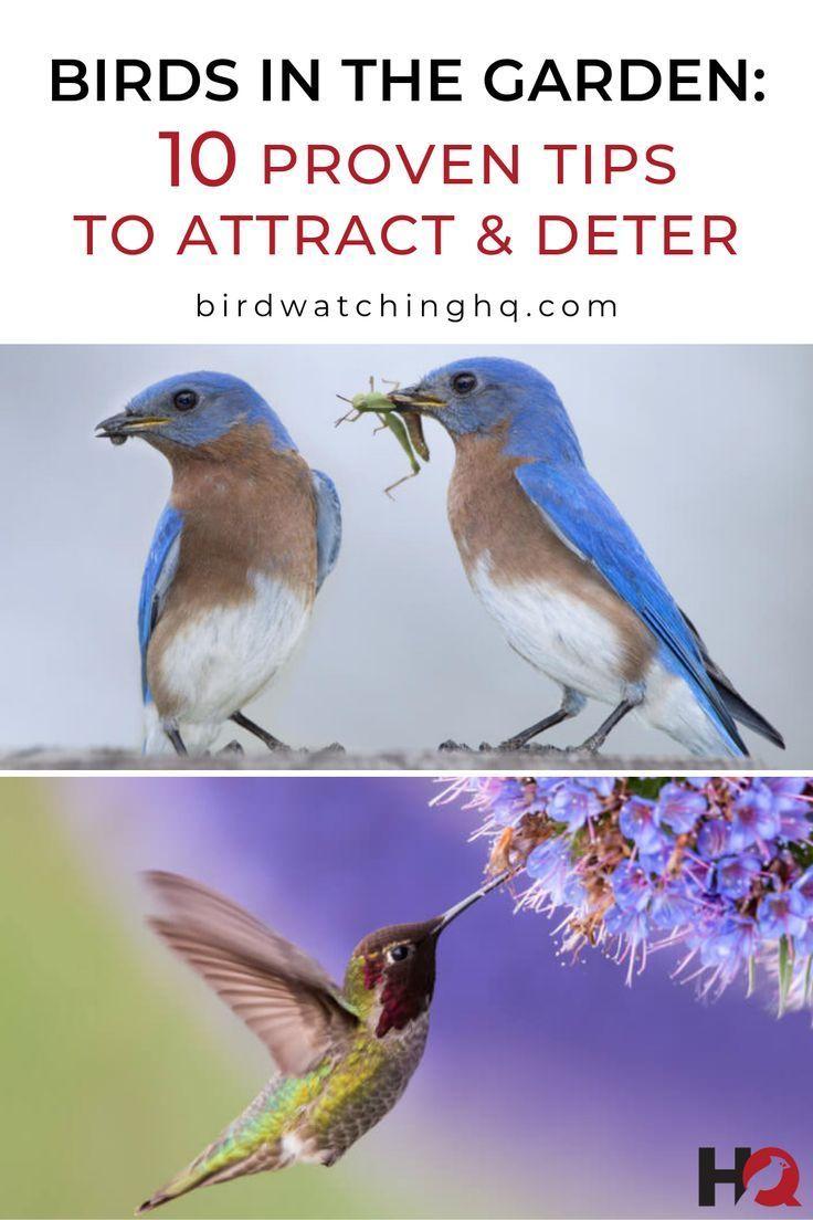 590a4a604a9e0c225f81e02d654f3718 - How To Get Rid Of Birds In Your Trees