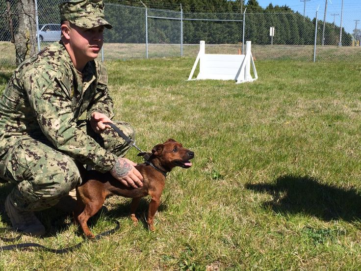 When Master at Arms 2nd Class Jordyn Japec met his new partner at Naval Station Norfolk, he was a bit taken aback.