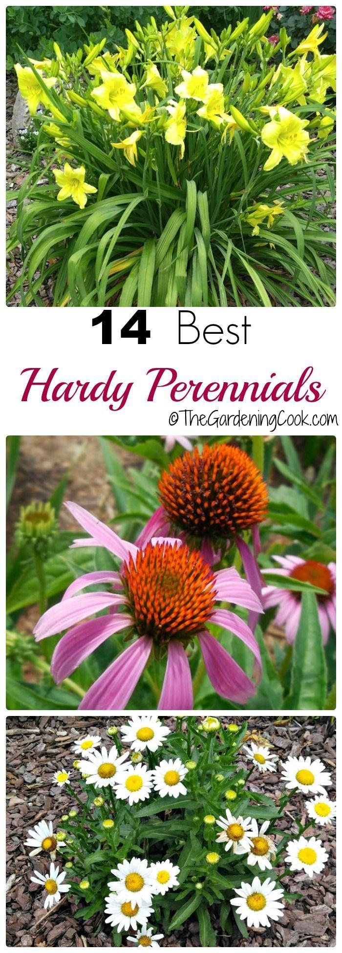 best 10+ perennials ideas on pinterest | perennial gardens