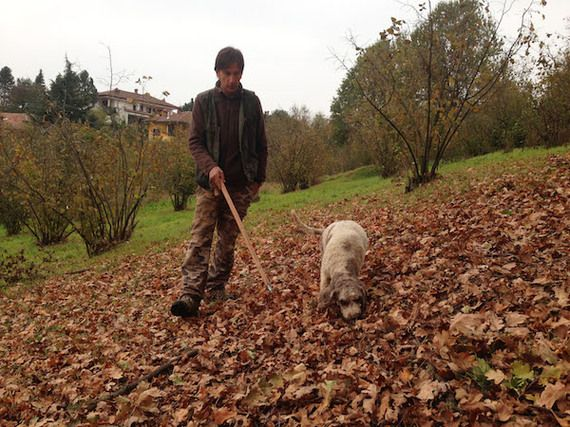 Truffle hunting in Alba