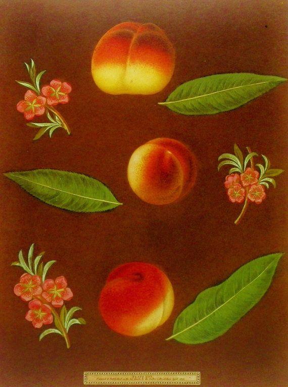 Peach, Flower Fruit Print, 19th Century Artist Illustration (Book Plate No. 67)