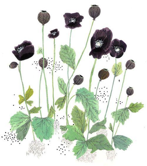 Изящные темно-фиолетовые, как ночь, цветы на тонких стебельках, маковые головки и изумрудные листья