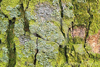 Various types of muss raised on the tree bark