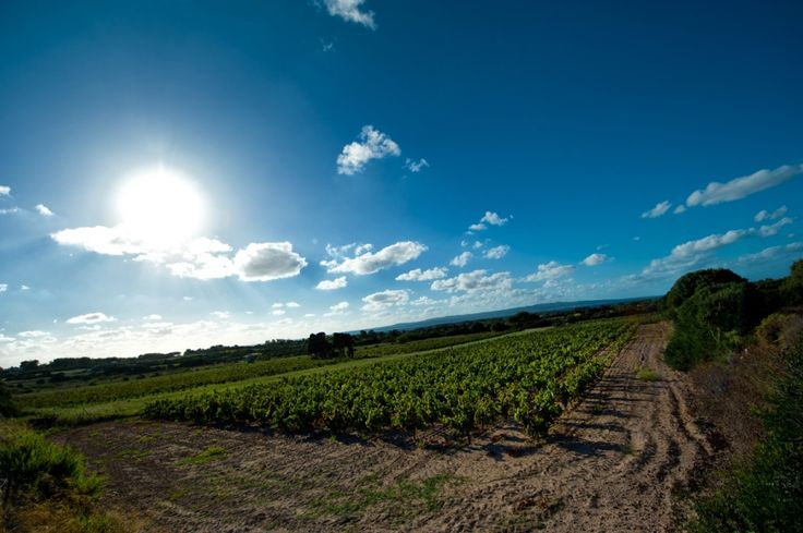 #wine #tasting #sant'antioco #sardinia