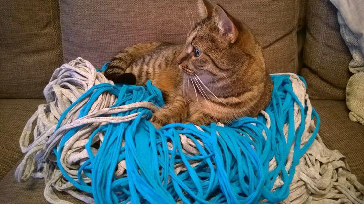 Laaduntarkkailija #kissa #käsityöt