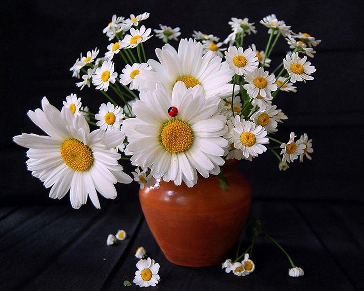 1179 best secret garden images on pinterest for Flowers that represent love