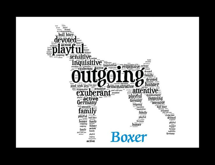 Traits of the Boxer In the 1800s, German hunters began a concerted effort to create a new breed, crossing their bull baiting dogs with mastiff-type dogs for size and with terriers for tenacity. The re