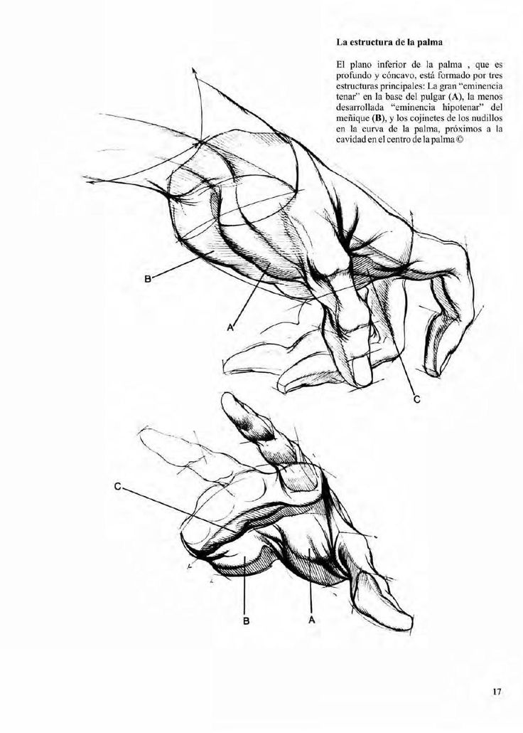 63 best Anatomy images on Pinterest | Human anatomy, Faces and Anatomy