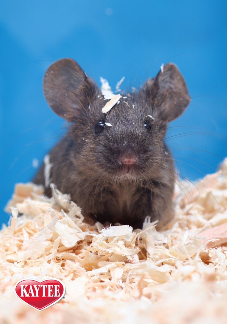 Mice are entertaining and easy to care for which makes for