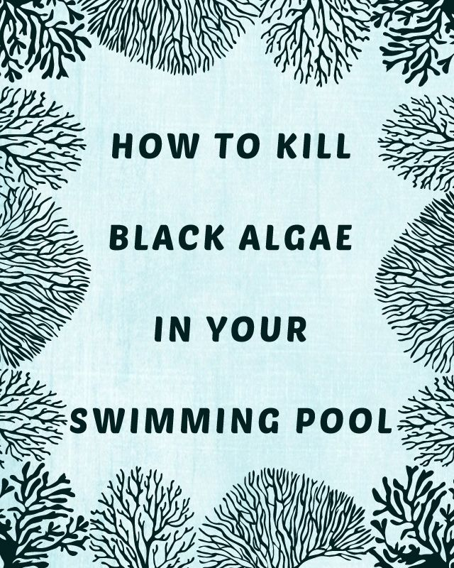 How To Kill Black Algae In Your Swimming Pool The O 39 Jays Pools And Swimming