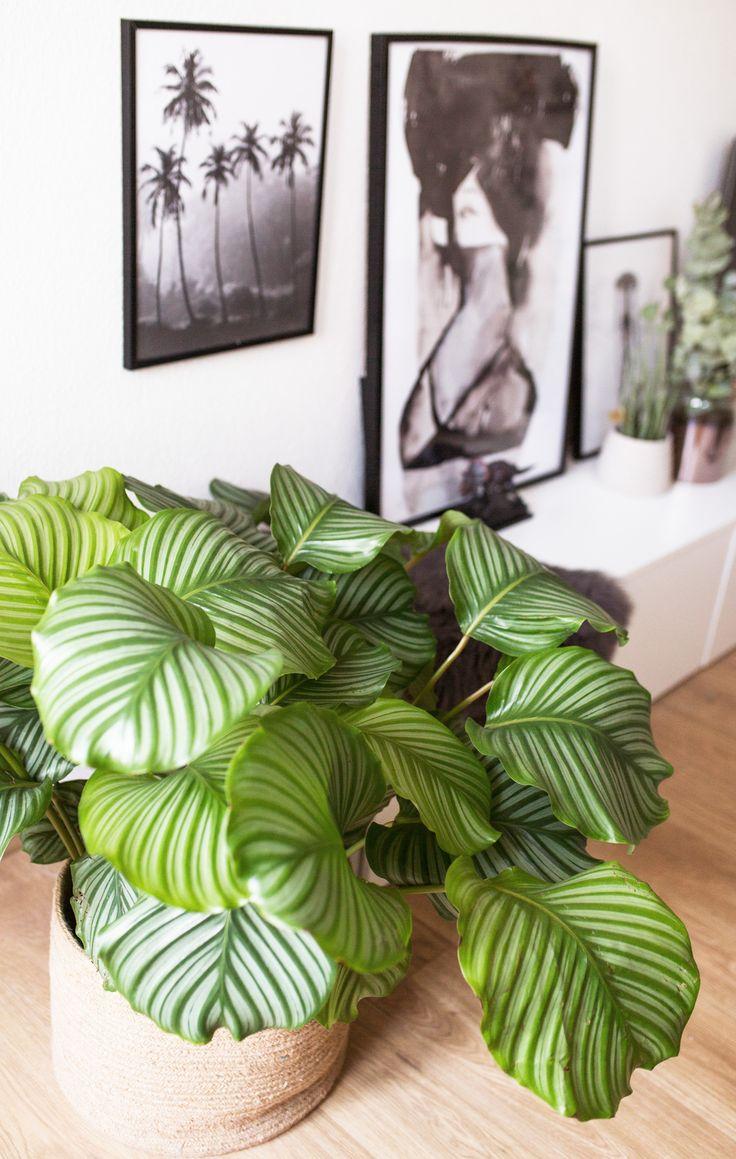 Die 25+ Besten Ideen Zu Pflegeleichte Zimmerpflanzen Auf Pinterest ... Zimmerpflanzen Pflege Pflanzenarten