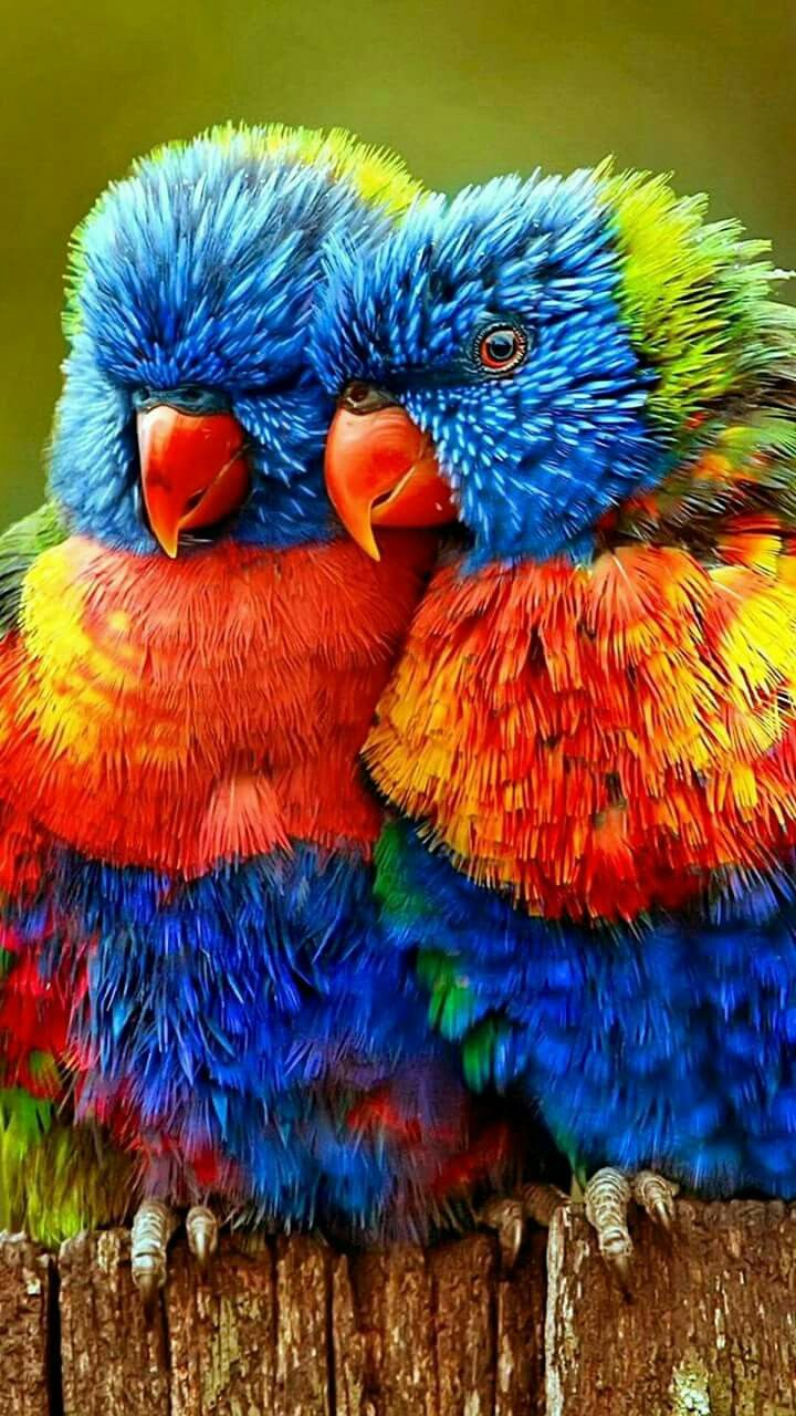 These birds look like those koosh ball figures you used to play with