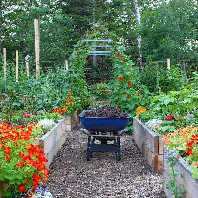 10 Creative Vegetable Garden Ideas: 1061 Best Vegetable Gardening Images On Pinterest