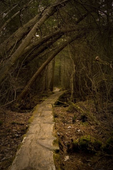 The narrow path carved its way through the wood and disappeared amongst the vines, trunks and branches.