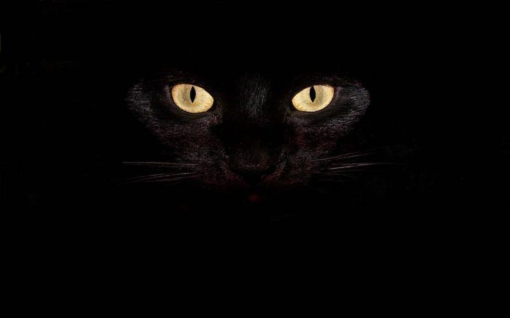 #Cat #eyes #black