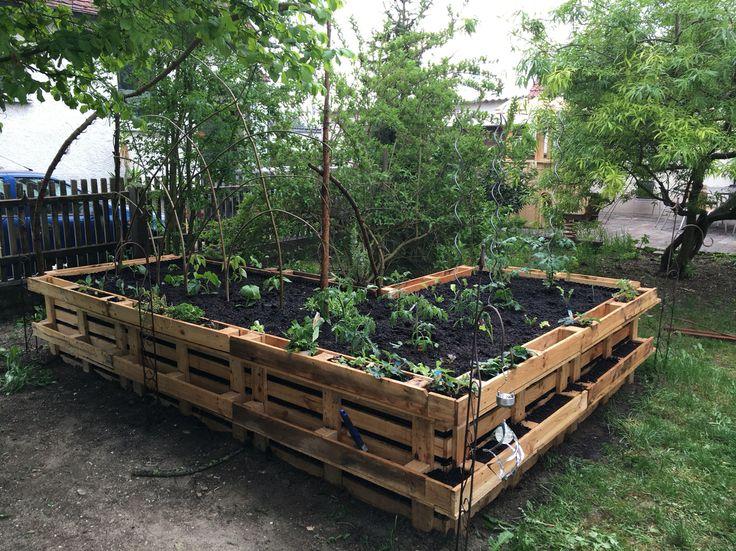 hochbeet mit tomaten gurken und vielen mehr bepflanzt hochbeet aus paletten pinterest. Black Bedroom Furniture Sets. Home Design Ideas