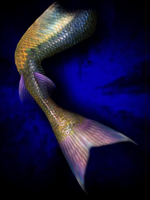 Real Mermaid Tail 17 Best images about M...