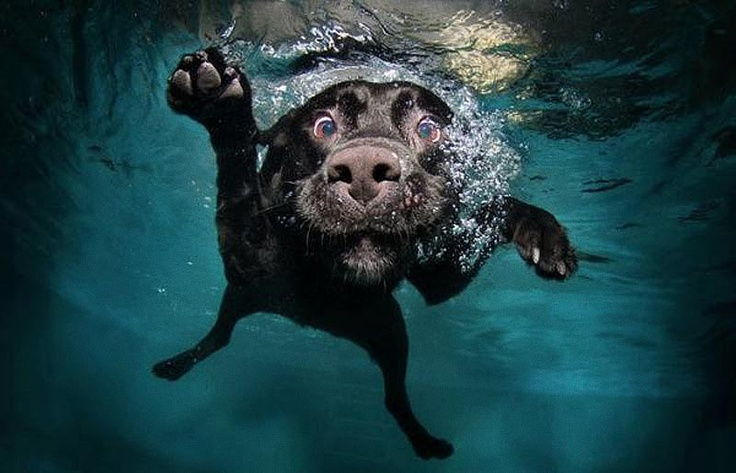 We can't help but love these underwater photographs of dogs by photographer Seth Casteel.