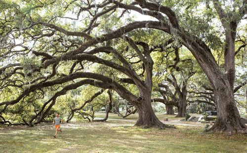 Rave Run: New Orleans - The 1,300-acre City Park, famous for its ancient oak trees and moss canopies, houses miles of paths that snake around bayous and past the Ted Gormley Stadium, site of the 1992 Olympic Track Trials.