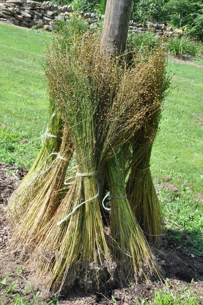 Rippling & Retting Flax at home for linen production-fascinating!  I want to try it!