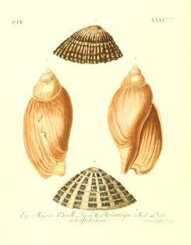 V 2 ptie 4 6 les delices des yeux et de l 39 esprit ou collection generale des differentes - Differentes especes de pins ...