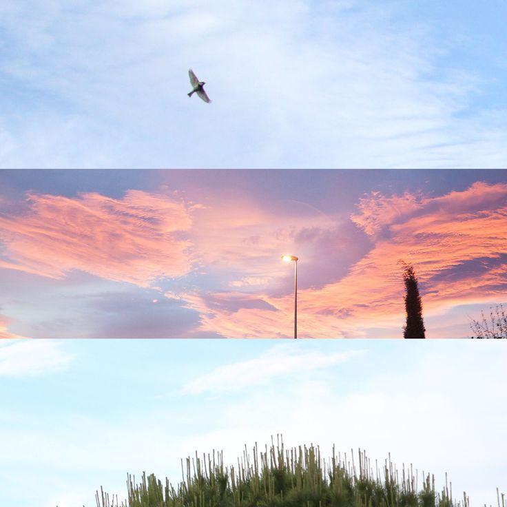 El ave, el ocaso y la copa del árbol / The bird, the sunset and the tree crown. Fotografía de Luis Otero Huarotte. _____  #aves #birds #birdslovers #ave #fotografiadeaves #bird #birdsflying #birdfly #avevolando #birdphotos #sunsetvibes #sunsetsky #sunsetglow #arreboles #arrebol #atardecernaranja #atardecermagico #arbusto #treecrown #bushes🌳 #copadearbol #treetopstyle #treetopchillin #treetopview #birds🐦 #sunsetglows #nubesrojas #nubesnaranjas #orangeclouds #treecrowns