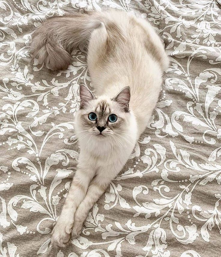 Marshmallow Cat Bed [HOT Selling in 2020 Beautiful cats