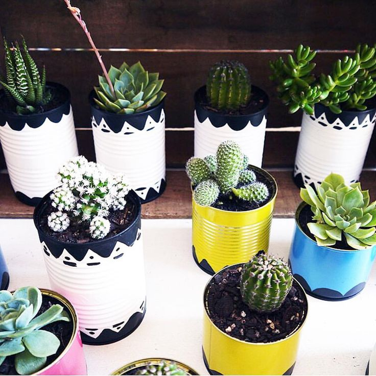 "Rebecca Lopez on Instagram: ""I love when readers share their projects with me, @thecolourcurator made these fabulous planters for her party and filled them with fun succulents and cacti! They were inspired by the painted tin cans she saw in my DIY Cactus Plants post. #craftedsparrowfaves"""