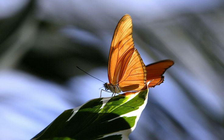 Butterfly macro Photography