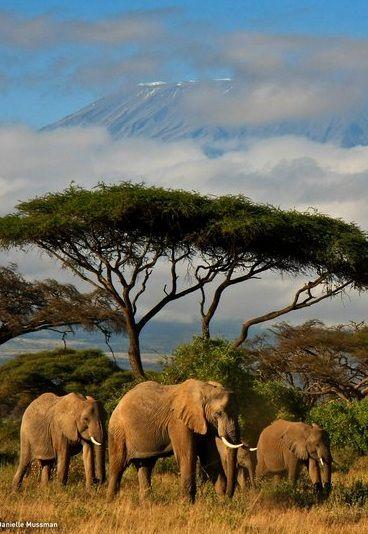Kilimanjaro hidden behind the clouds. Bucket list, go back and climb Kili 2020.