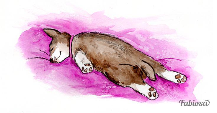 El significado de las 7 posiciones más comunes que adoptan los perros al dormir