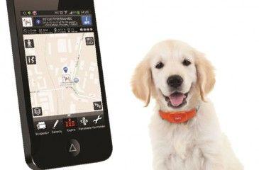 Ошейник с GPS для собак для охоты. Цены на навигаторы для собак