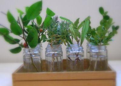 Butasirea este una din cele mai obisnuite si mai simple metode de inmultire a plantelor, ce consta in punerea la inradacinat a unui lastar de 5-8 cm...