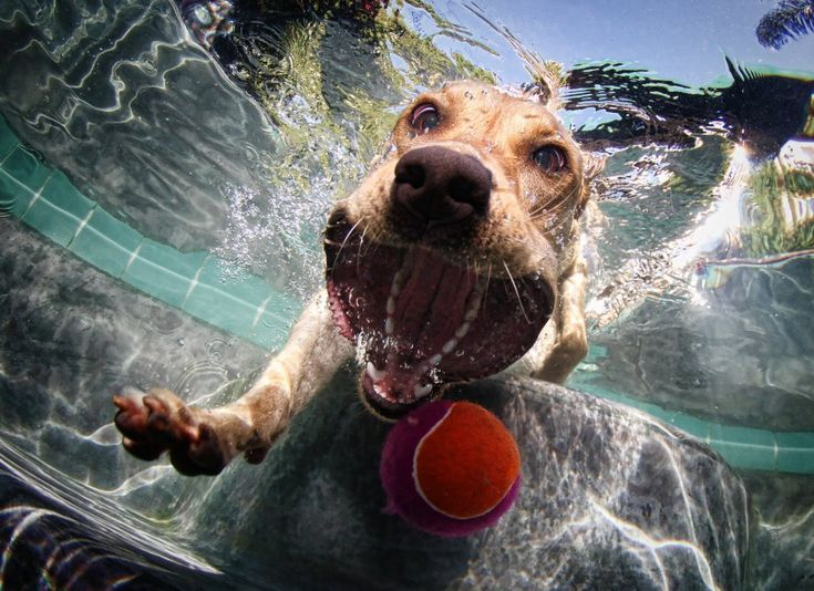 Underwater Dog Photography by Seth Casteel - Wicked! (there's more on the site)