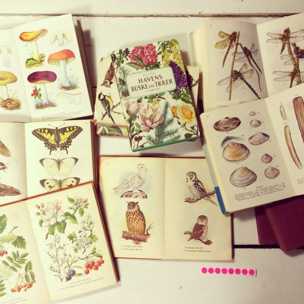 365 mood boards in 2014. Mood board #66: Treasure hunting for fauna, flora, birds and fish. Smashup. Instagram filter Valencia. Photographer: Susanne Randers
