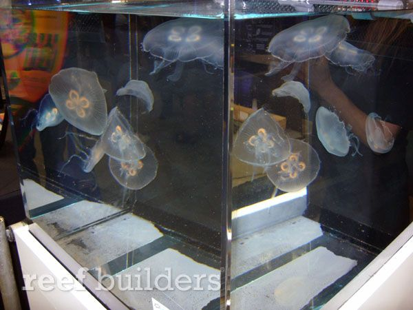 Sunset Marine Labs outs the Neo Cube 35 all-one-one jellyfish tank, with fun light-mixing remote