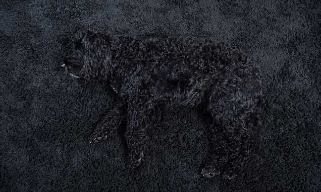 Brummie retired detective daily hunt for pet Milo camouflaged by rug